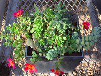 SucculentPlanter-FlowerFundraiser
